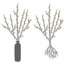 Paljas- eli avojuurinen taimi